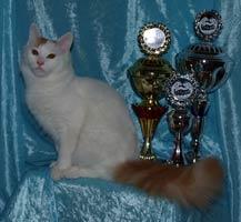 Cami vinder BIS på en udstilling i Tyskland